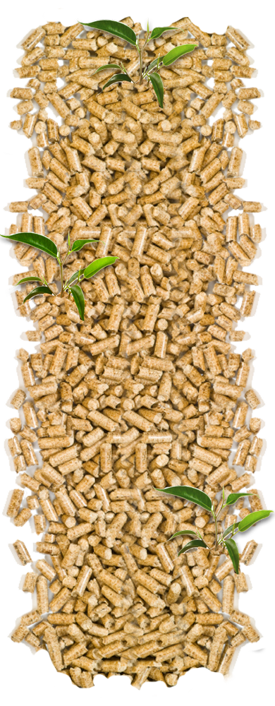 Wood pellets in CT